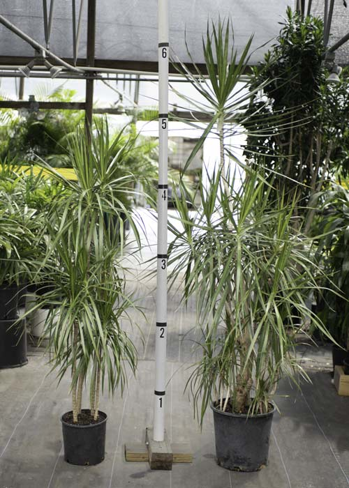 plant-image-gallery