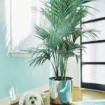 A Dog, A Palm, and a Tropical Drink