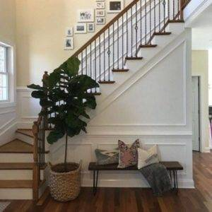 Heather's new Fiddle Leaf Fig from PLANTZ